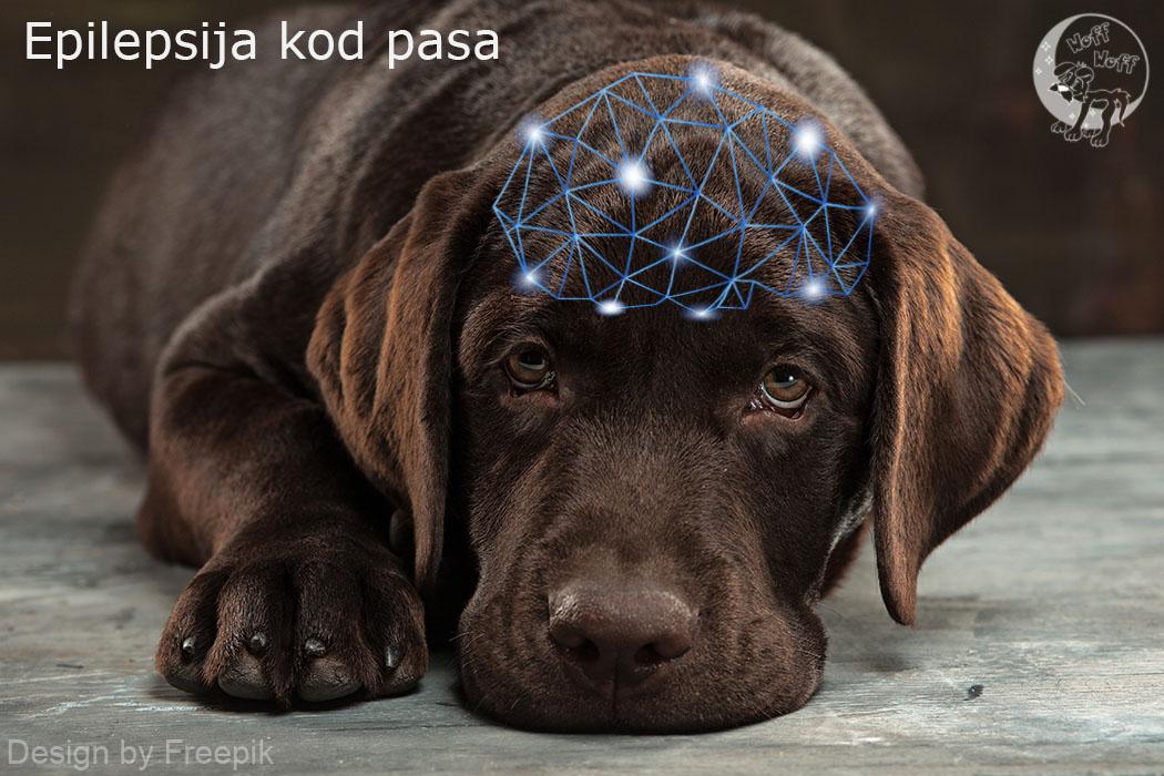 Epilepsija kod pasa