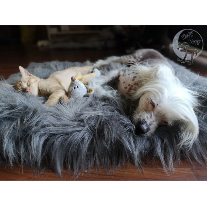 171 Royal 187 Dog Amp Cat Pillow Cover Woff Woff Dog Dream