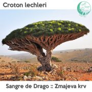 Croton lechleri
