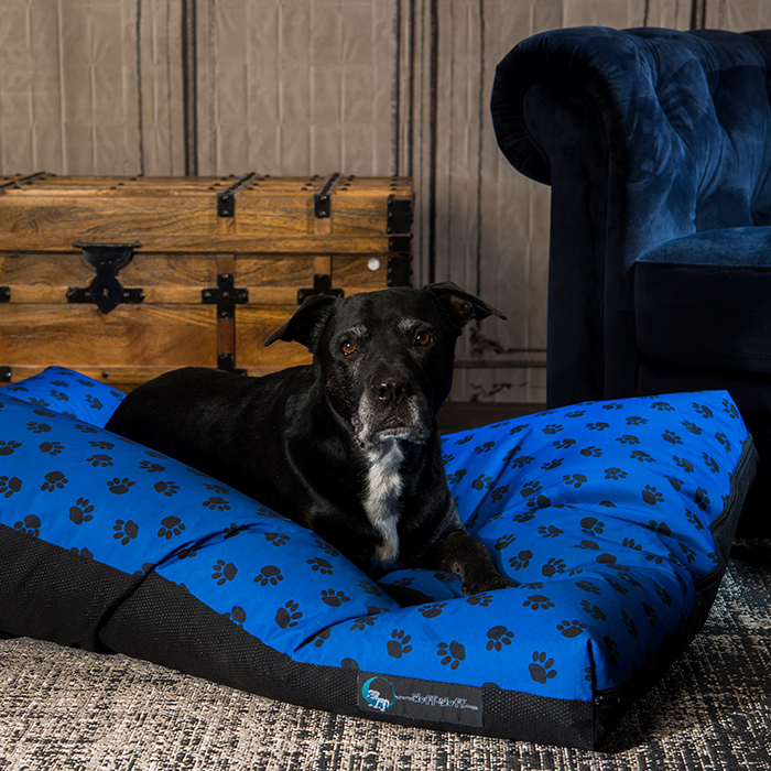 Incredible Paws Bean Bag Dog Bed Squirreltailoven Fun Painted Chair Ideas Images Squirreltailovenorg