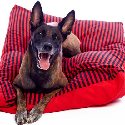 best orthopedic dog bed for large dogs