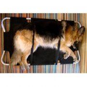 dog-on-stretcher