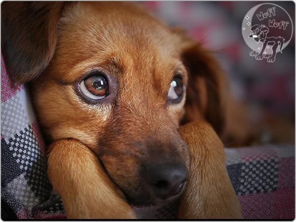 inkontinencija psi