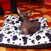 orthopedic beds for small dogs