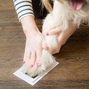 paw-print-ink