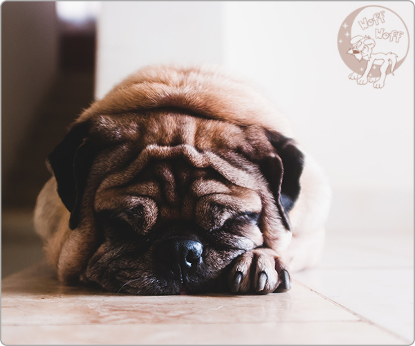 psi inkontinencija